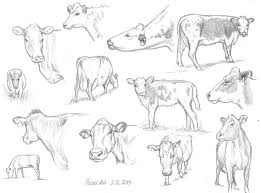 cow sketches pencil 1 by nillamustikka on deviantart