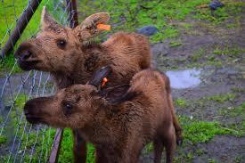 Alaska Wildlife images Alaska shore experts seward to anchorage wildlife tour transfer jpg
