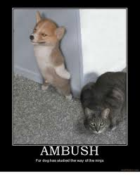 Ninja Memes - ambush for dog has studied the way of the ninja motifakecom meme