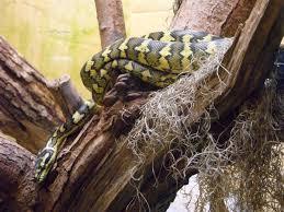 snake terrarium reptile free stock photos in jpeg jpg 4320x3240
