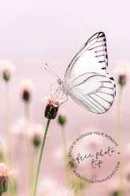 added to the free image library pastel butterflies