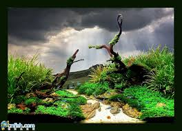 Dramatic Aquascapes Trend Backgrounds Changing Color Aquascaping World Forum