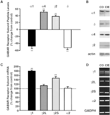 withdrawal from chronic intermittent ethanol treatment changes