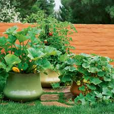 pictures of a garden how to grow vegetables in pots sunset magazine