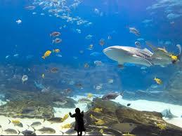 best us aquariums by region travelchannel com travel channel