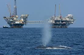 oil and gas exploration poses severe risks to marine species