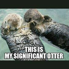 Sea Otter Meme - sea otter meme 28 images sea otter memes save the sea otters
