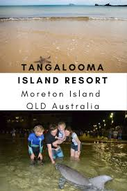 what to see and do at tangalooma island resort moreton island