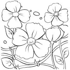 blooming hibiscus flower coloring page blooming hibiscus flower