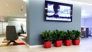 plants for office how to choose best plants for your office