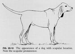 Internal Dog Anatomy 20f10 Jpg