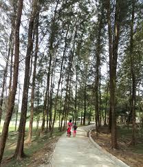 ls that look like trees my sarawak 2nd ed the rustic ru trees
