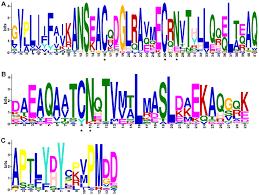 Meme Motif - sequence logos meme logos of conserved motifs identified in
