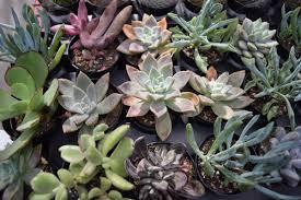 native desert plants living desert u0027s plant sale returns this month score rate desert