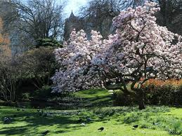 At Hyde Park Best Places To See Flowers In Piccolo Explorer