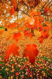 Fall Autumn by 829 Best Höstmys Autumn Poetry Images On Pinterest Autumn Fall