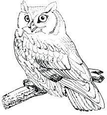 desert owl coloring page birds of prey coloring pages fancy baby owl coloring pages for your