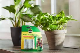 amazon com miracle gro indoor plant food 48 spikes