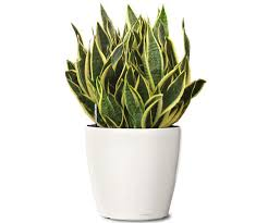 5 indoor plants that are natural purifiers