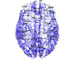 scientists map brain s wiring diagram swi swissinfo ch