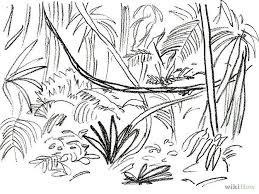 drawn vine rainforest plant pencil and in color drawn vine