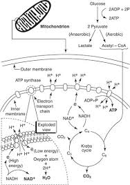 Photosynthesis Ms Wilson S Classroom Photosynthesis Coloring Page