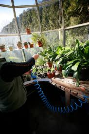 winter watering requirements for the greenhouse beginner u0027s