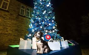 telegraph christmas charity appeal make this year u0027s charitable