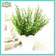 eucalyptus branches source quality eucalyptus branches from global