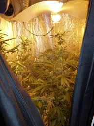 Polizei Bad Schwalbach Polizei Deckt Cannabis Plantage In Privatwohnung Auf Wiesbaden112 De