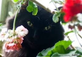 The Geranium On The Windowsill Just Died Daily Photo Purrfect Camouflage The Creative Cat