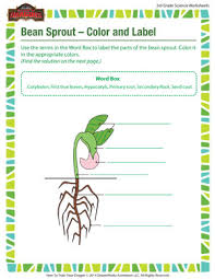 bean sprout u2013 color and label u2013 free science worksheet for 3rd