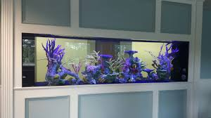 large aquarium design aqua creations