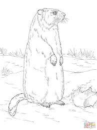 groundhog is standing near den entrance coloring page free