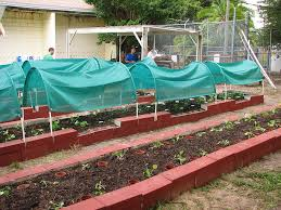 Garden Raised - lessons of lead in local urban gardens raised beds not enough