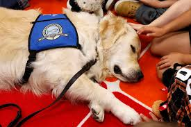 How To Get A Comfort Dog Dog Visits To Offer Comfort After Texas Church Shooting
