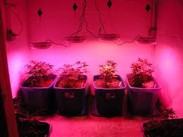 led marijuana grow lights marijuana grow journal flowering under led part 2