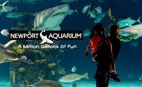 aquarium bureau custom aquariums acrylic tank manufacturing midwest custom aquarium