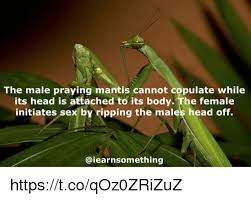 Mantis Meme - the male praying mantis cannot copulate while its head is attached