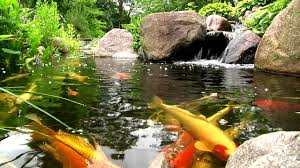 york lancaster harrisburg pa backyard koi fish ponds waterfalls