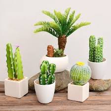 small potted plants usd 8 02 idyllic family simulation succulents cactus small potted