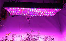 led grow lights spider mites with led grow lights