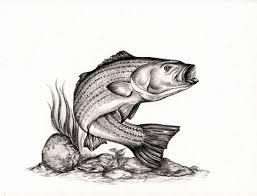 pencil drawings bass fish drawing art u0026 skethes