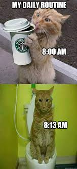 Daily Meme - my daily routine memes quickmeme