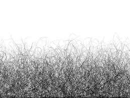 gray female pubic hair pics ncbi rofl frequency of pubic hair transfer during sexual