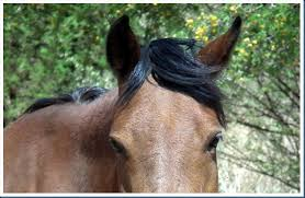 hairstyles for horses horses hairstyles the photographic journey of bulldog