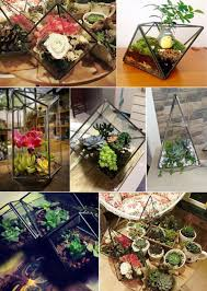 geometric diamond shape succulent plants garden glass greenhouse