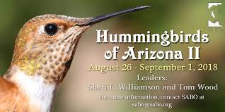 Arizona Wildlife Tours images Hummingbirds of arizona tour ii jpg