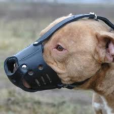 american pitbull terrier game bred bloodlines garrett s crenshaw s ch jeep rom patricks tombstone rom