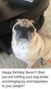 Happy Birthday Pug Meme - happy birthday sumo glad you are fulfilling your pug duties and